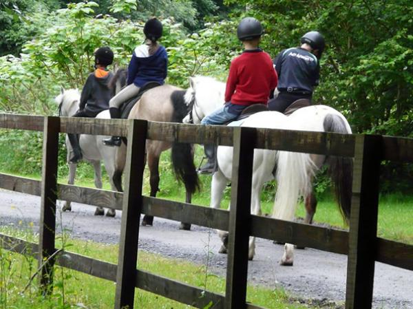 Horseriding Lessons in Mayo and Galway